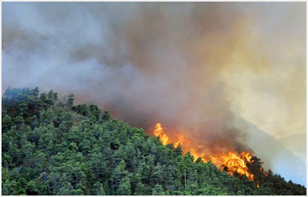 Hydrorehabilitacja lasów po pożarze